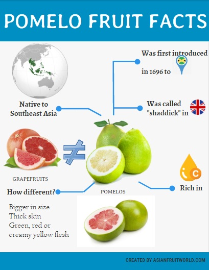 pomelo fruit facts infographic