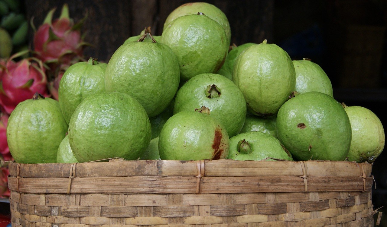 Guava juice benefits asian fruit world do you know guava also contains lycopene lycopene is an antioxidant found in tomatoes but this nutrient is also found in guava along with vitamin c ccuart Image collections