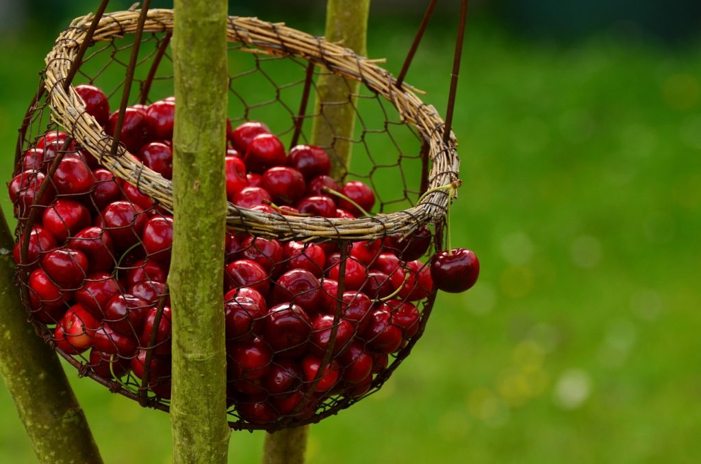 cherry top 6 fruits to increase breast size