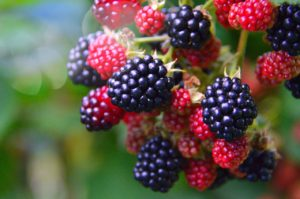 berry consumption benefits 3